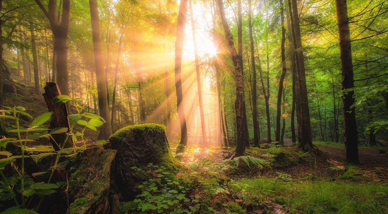 The Long-Term Effects of Mystical Experiences