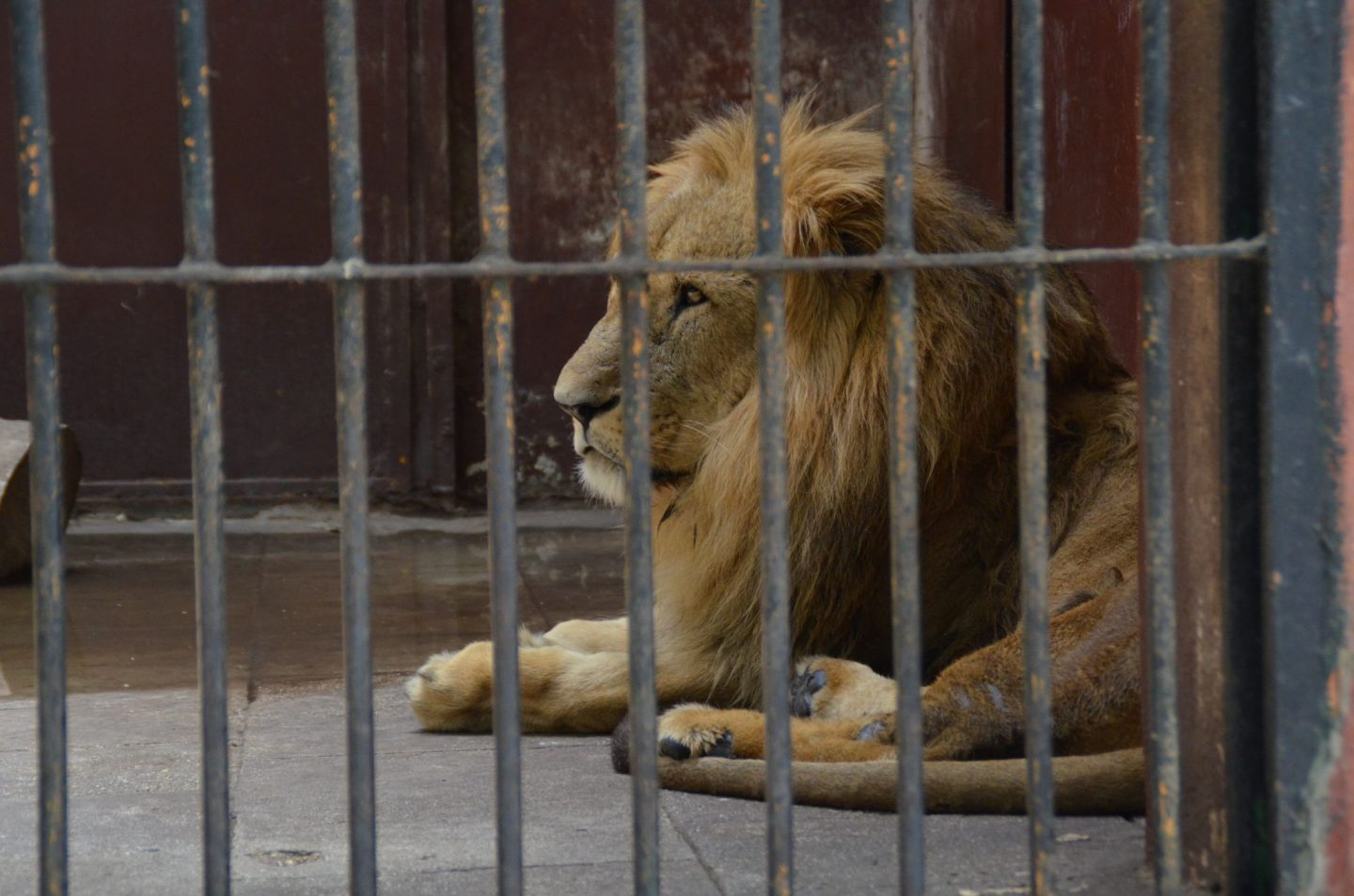 Why It's Time to Boycott Zoos