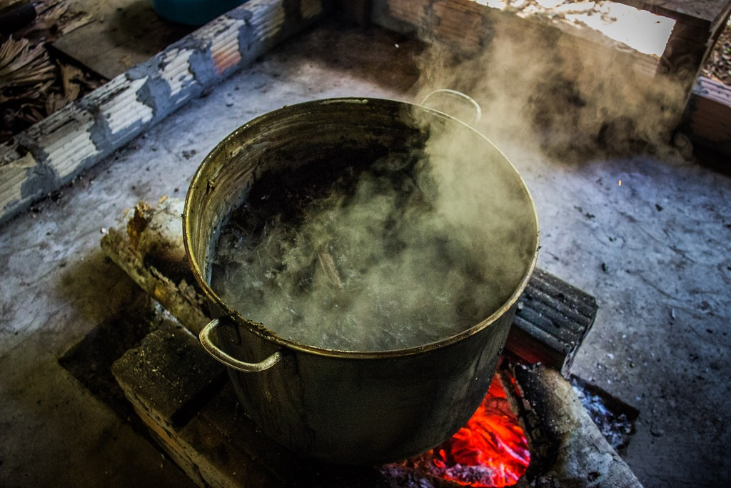 The Mysterious Origins of Ayahuasca
