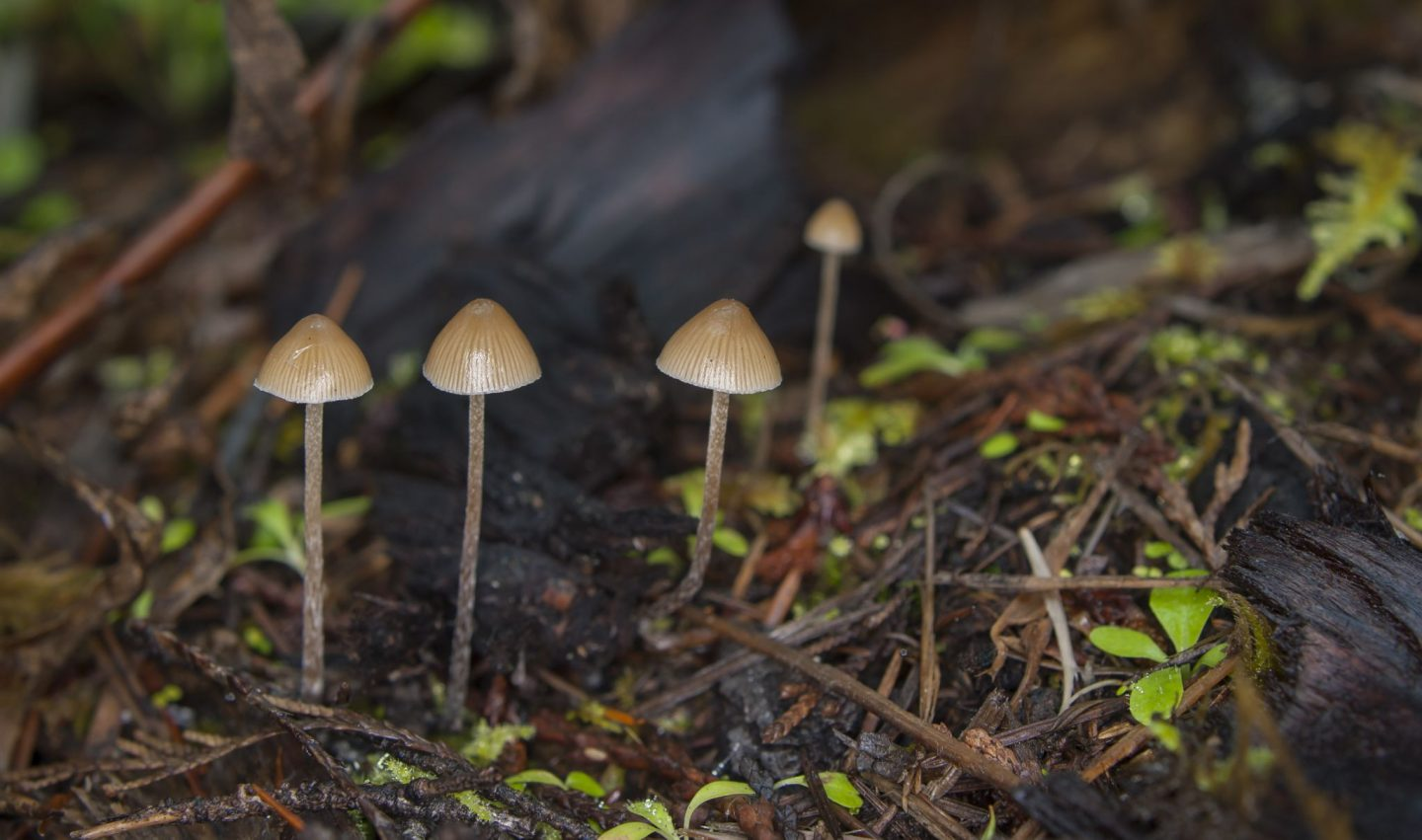 Why Psychedelics Don't Deserve the Stigma They Carry