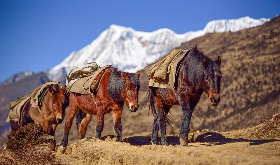 Is It Immoral to Use Pack Animals for Trekking?