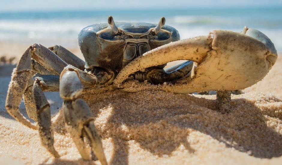 The Crab Mentality: Why Can't We Be Happy for Other People's Success?