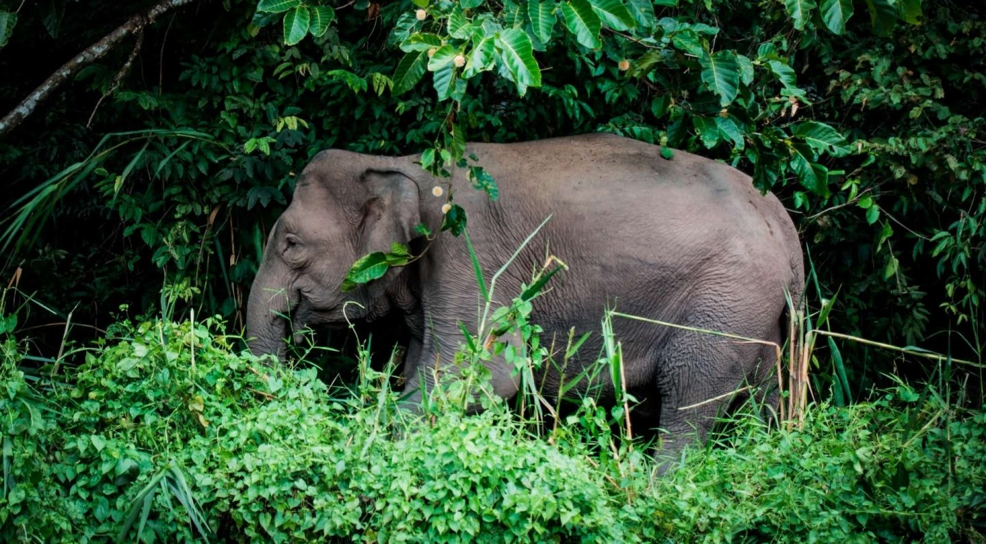 Feeling Ambivalent in Borneo: A Cruise Down the Kinabatangan River