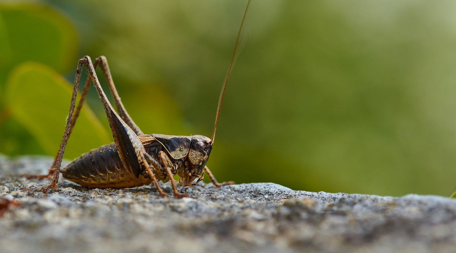 Will We All Be Eating Insects in the Future?