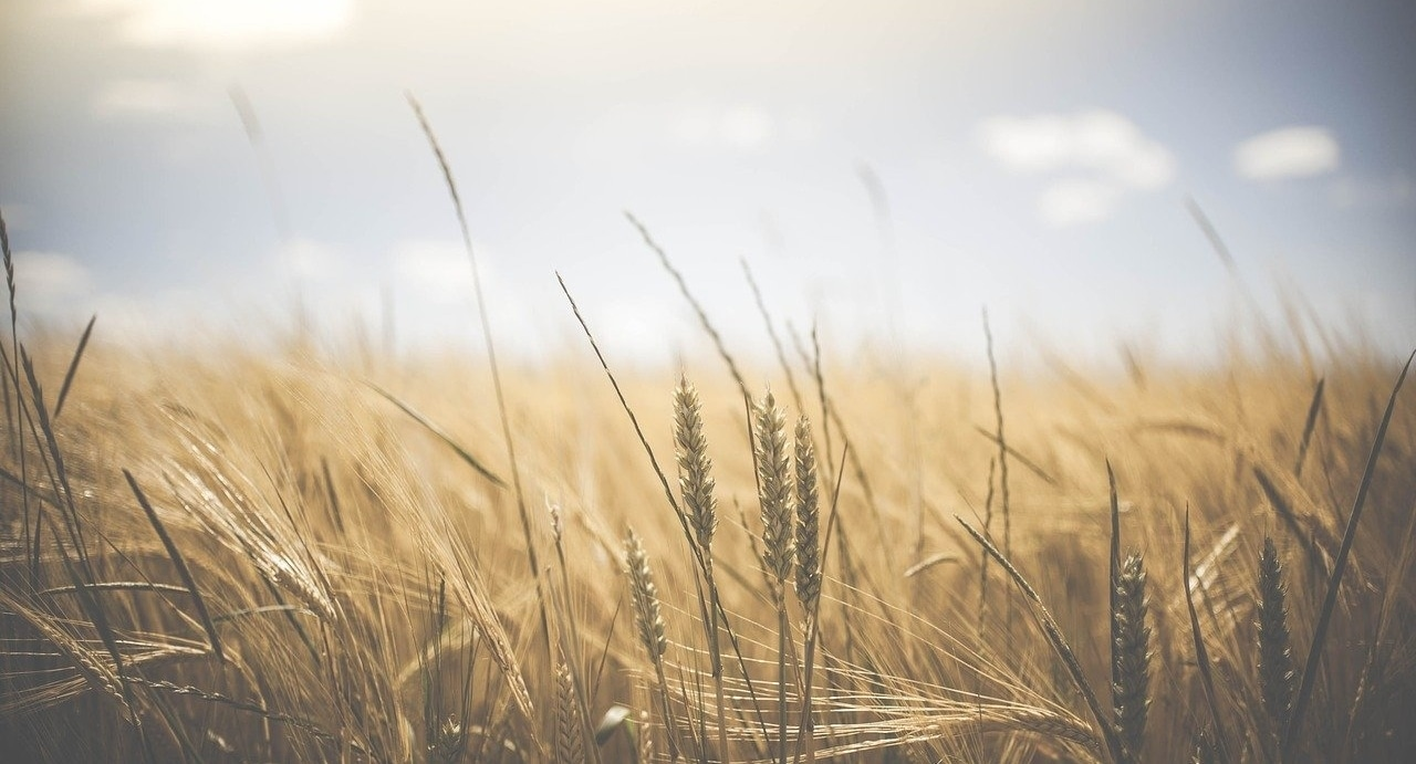 Finding Systemic Solutions to Food Insecurity
